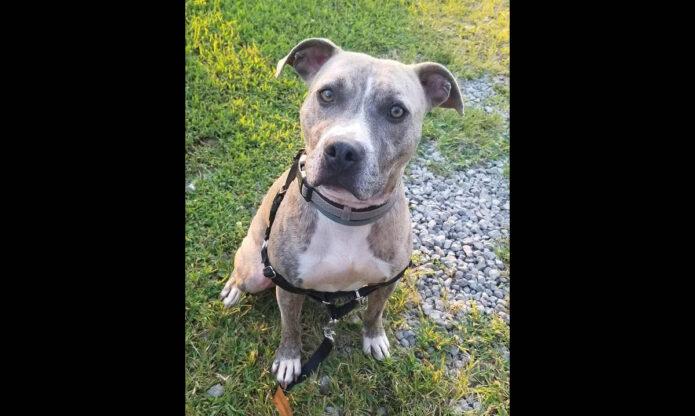 Companion Pet Rescue of Middle Tennessee - Att