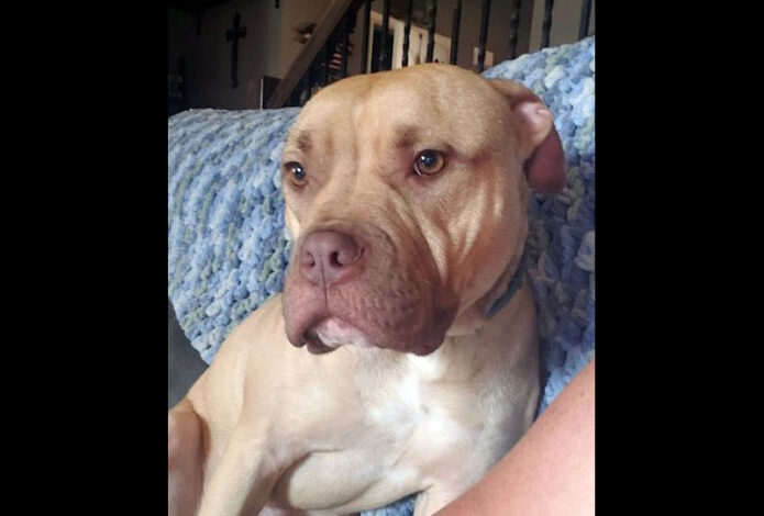 Companion Pet Rescue of Middle Tennessee - Larry