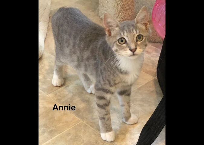 Dover County Humane Society - Annie