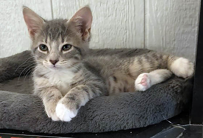 Nathan is available at Dover County Humane Society