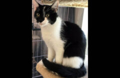 Dover County Humane Society – Turtle
