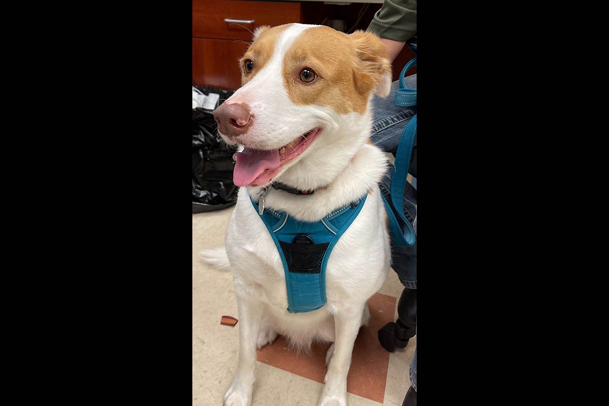 Montgomery County Animal Care and Control - Belle