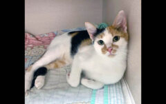 Crisco is available at Montgomery County Animal Care and Control
