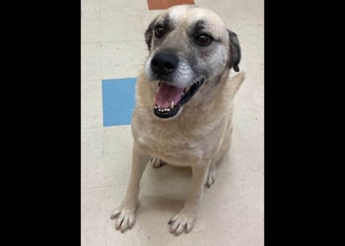 Montgomery County Animal Care and Control - Lady