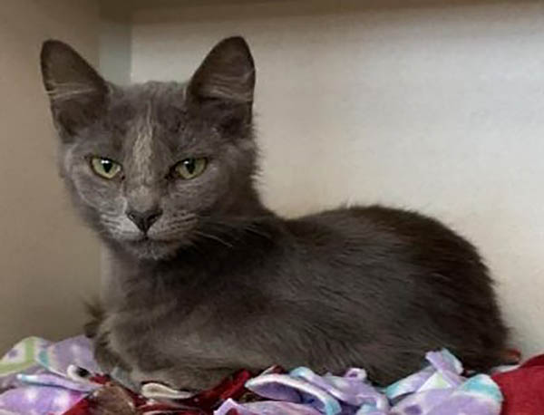 Montgomery County Animal Care and Control - Pudding