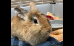 Montgomery County Animal Care and Control – Teddy Bear