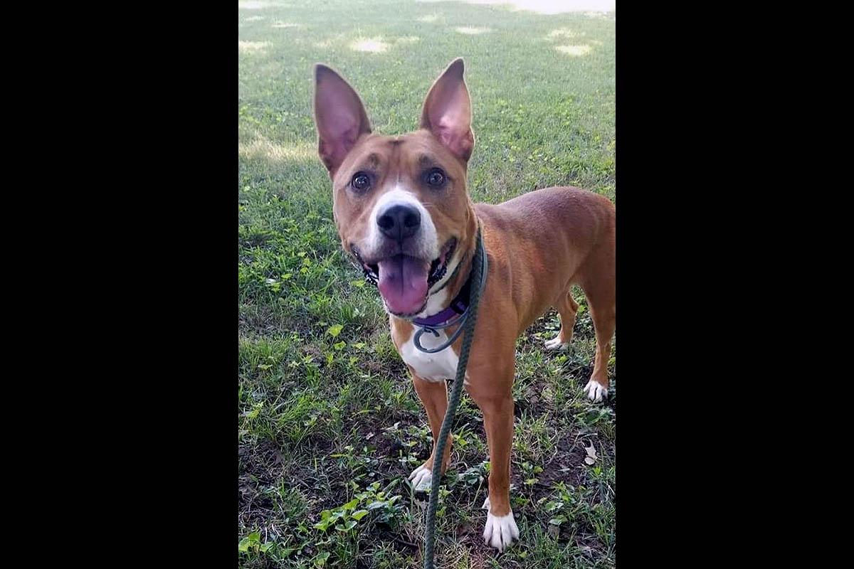 Companion Pet Rescue of Middle Tennessee- Copper