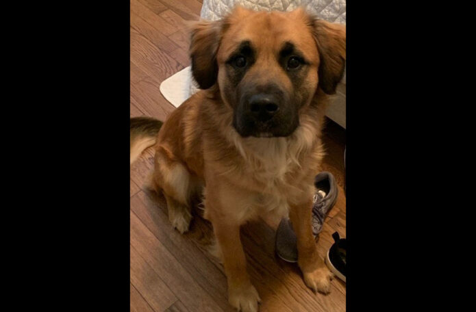 Companion Pet Rescue of Middle Tennessee - Draco