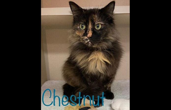 Montgomery County Animal Care and Control - Chestnut