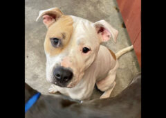 Drake is available Montgomery County Animal Care and Control