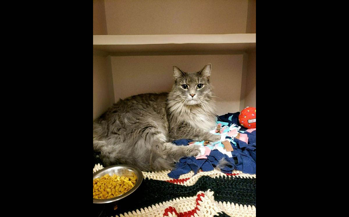 Montgomery County Animal Care and Control - Moo Moo