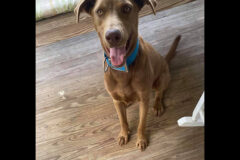 Stewart County Faithful Friends Animal Rescue – Bagsby