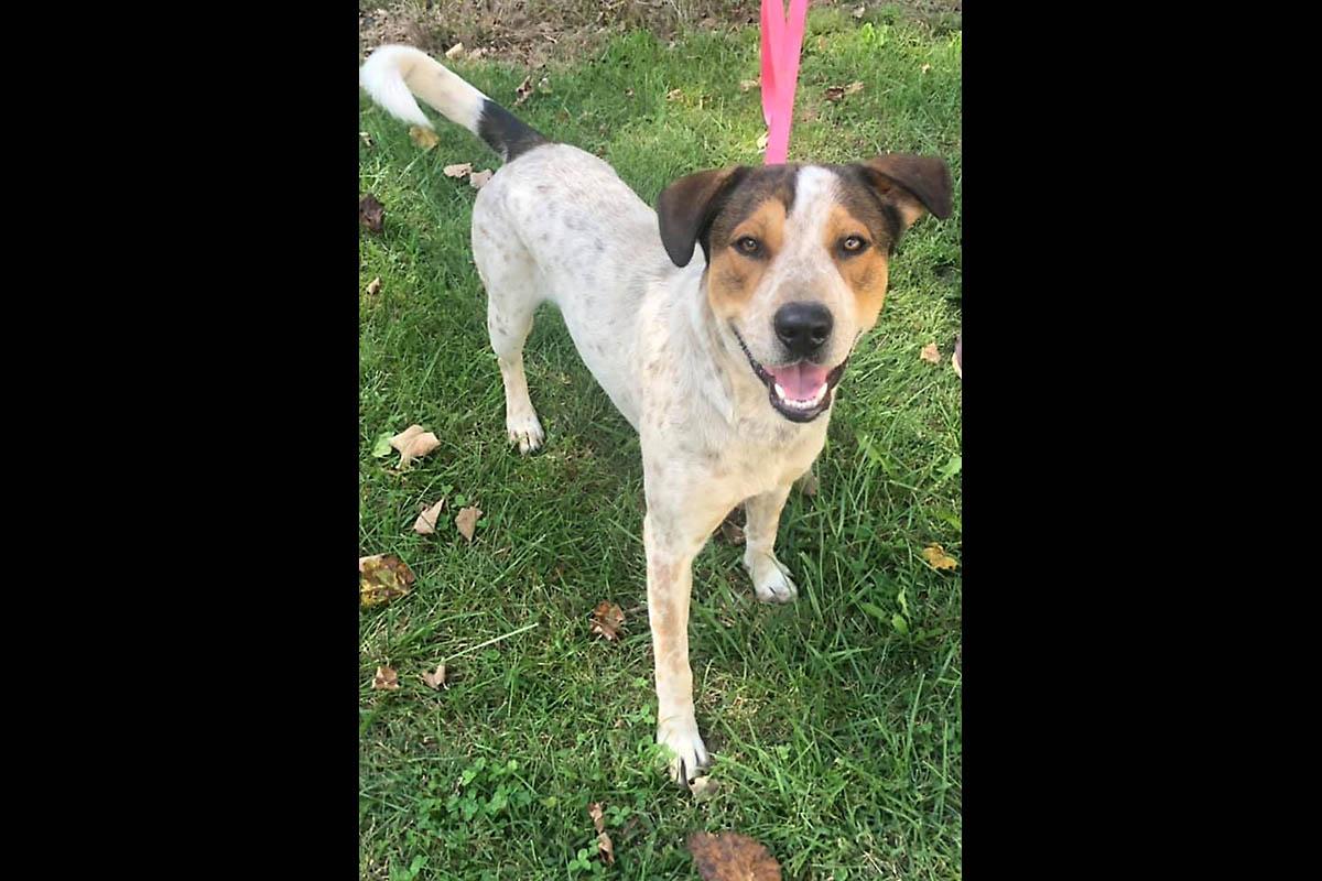 Stewart County Faithful Friends Animal Rescue - Traveler