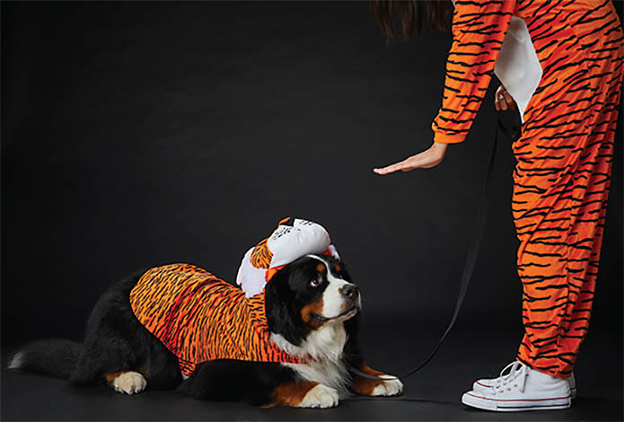 You and your pets can enjoy a happy Halloween in cute matching costumes. (petco)